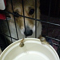 洛基想吃鍋牛