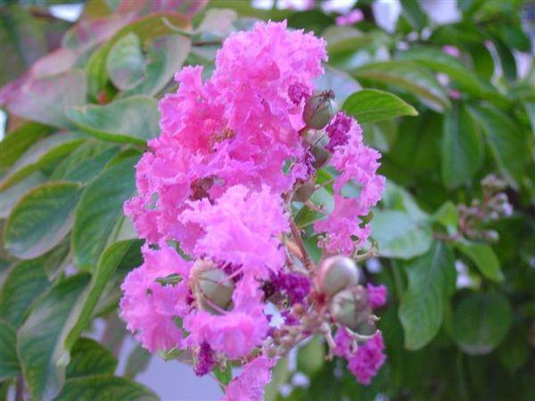 公公花園裏的花
