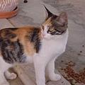隔壁家的小貓