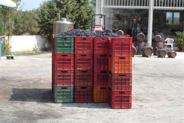 滿箱的葡萄