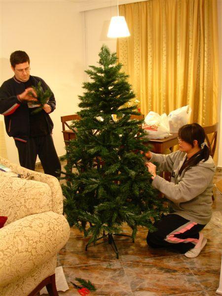中等大小的聖誕樹來囉