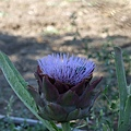 不知名的花朵