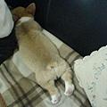 昏睡的Rocky