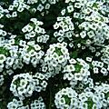 雅典家花圃裡的花