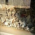 滿滿貝殼飾品