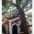 105 y.o. pine tree