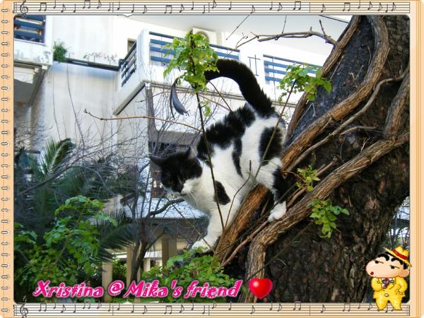 Mika's friend