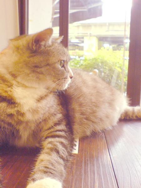 貓king側面