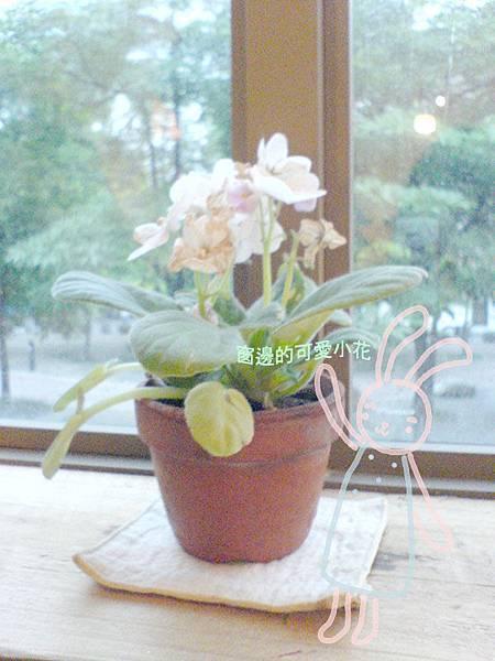 窗邊的小花