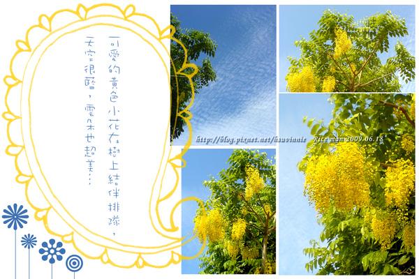 樹上的黃色小花.jpg