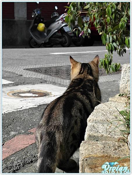 是隻可以出門溜搭的貓