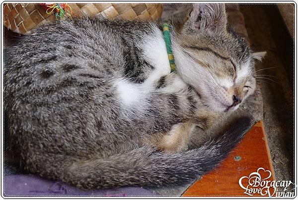 還碰到小小貓在睡覺