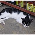 店內的黑白貓