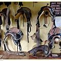牆壁掛滿馬鞍