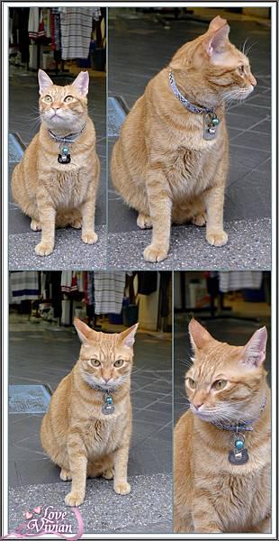 西門町的店貓