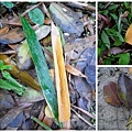 1115大安森林公園1.jpg