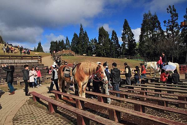 2013清境農場23
