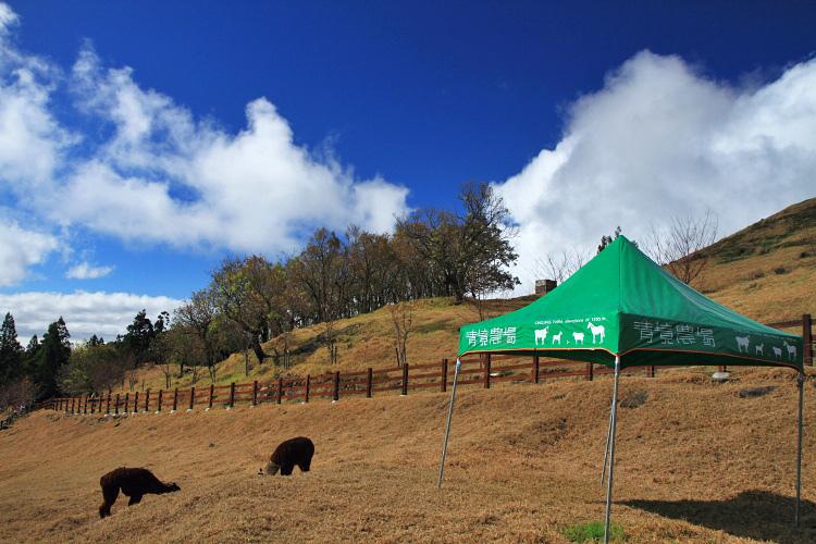 2013清境農場35