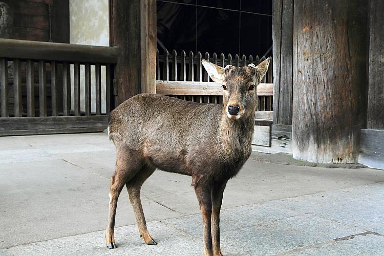 2015日本關西遊404