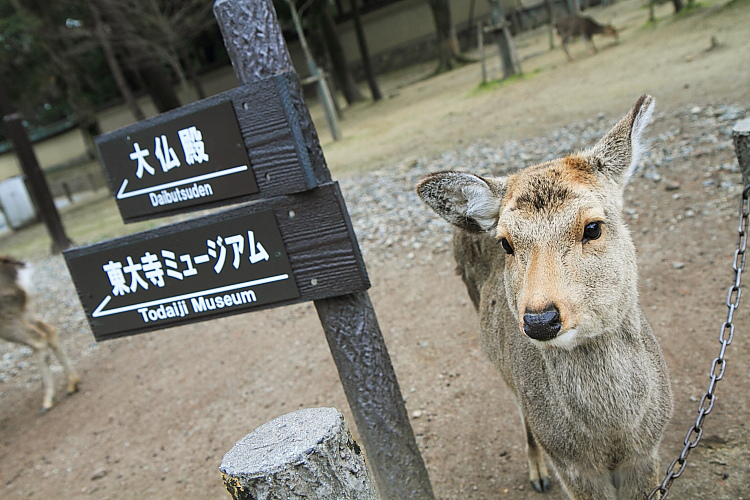 2015日本關西遊407