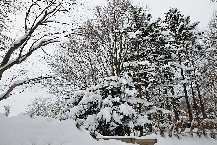 2017冬之北海道91