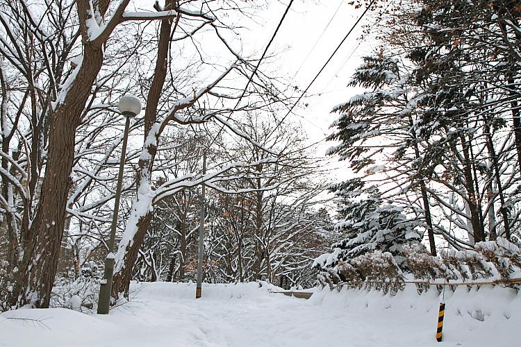 2017冬之北海道92