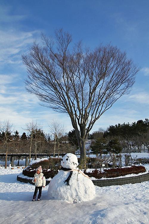 2017冬之北海道225