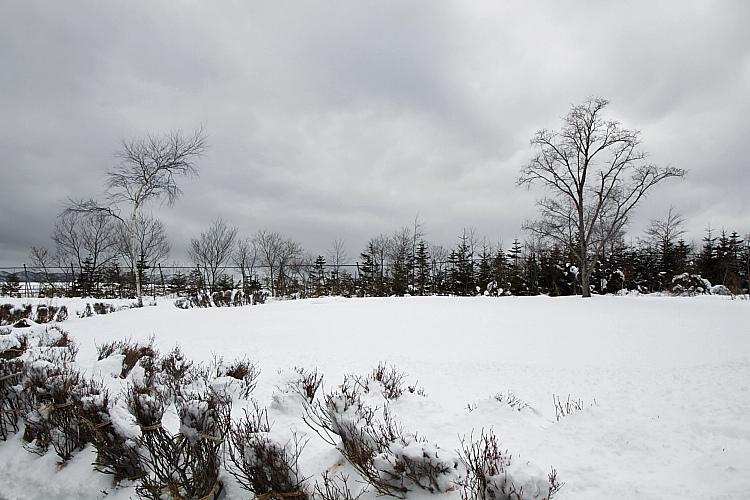 2017冬之北海道315