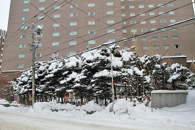 2017冬之北海道452