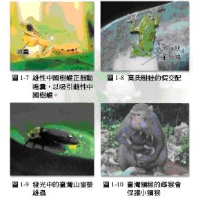 樹蛙獼猴.bmp
