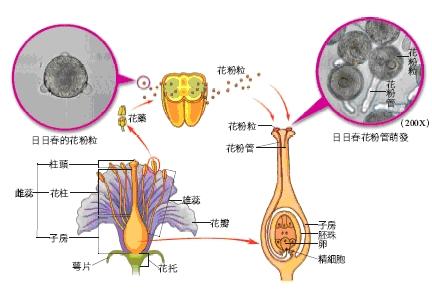 花之構造.bmp