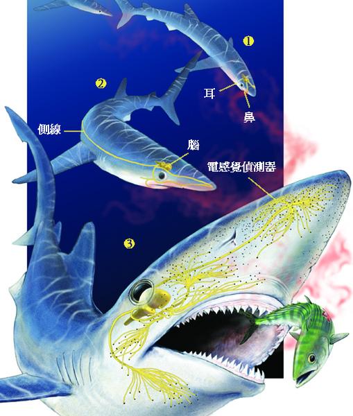 shark-2.jpg