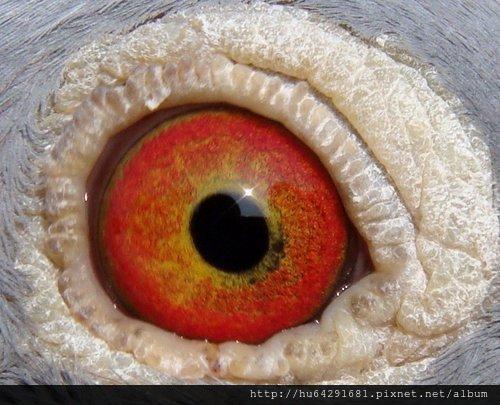 2010-670158 B 右眼