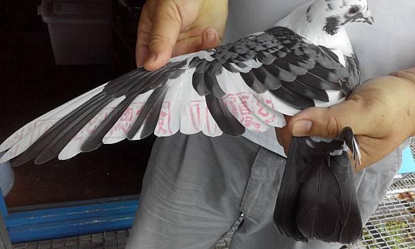 15-008676 右翅