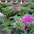 杉林溪-藥花園