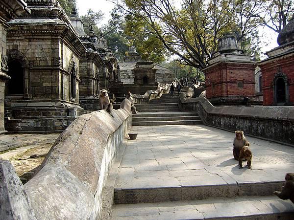 尼泊爾之旅 092-帕蘇帕提那寺外舍利塔