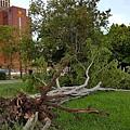 20150810八月風災