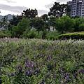 高雄中都濕地公園5.jpg