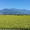 伯朗大道-田園景色4.jpg