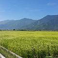 伯朗大道-田園景色6.jpg