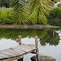 高雄-中都濕地公園3