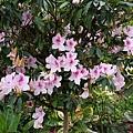 台南-南元花園休閒08