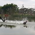 花蓮吉安鄉-松湖驛站周遭景觀08