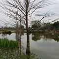 花蓮吉安鄉-松湖驛站周遭景觀15