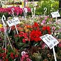 20160514 勞工公園-假日花市