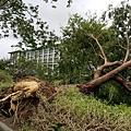 莫蘭蒂颱風重創南部-災後街景20160915