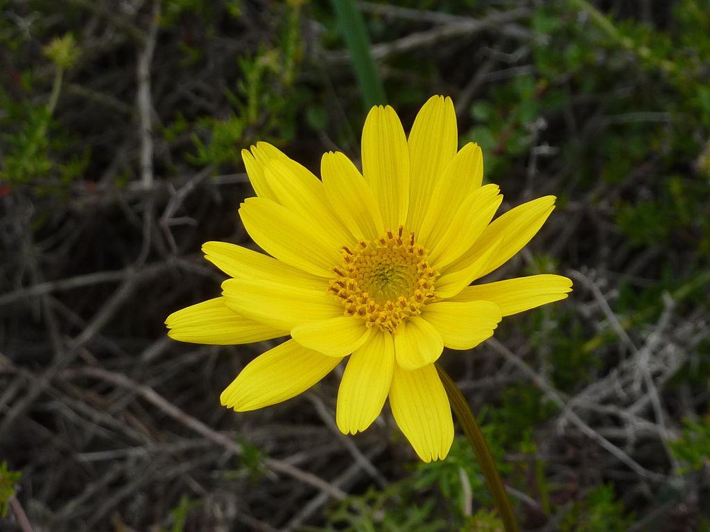 一朵花的距離