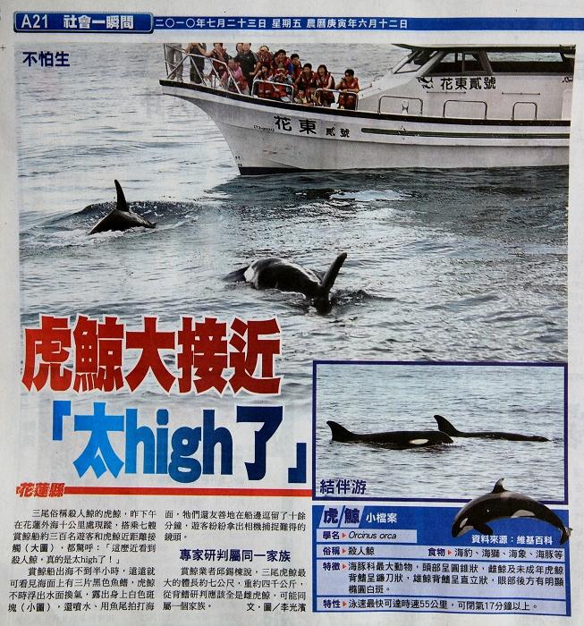 虎鯨by蘋果日報.jpg