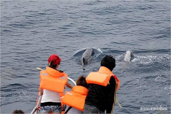 2012 六月鯨豚09
