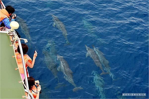 2011 阿榮鯨豚16
